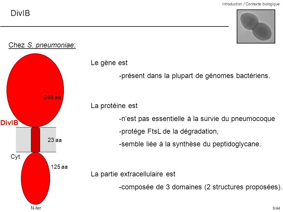 DivIB Introduction / Contexte biologique Chez S. pneumoniae: Le gène est -présent dans la plupart de génomes bactériens. La protéine est -nest pas ess
