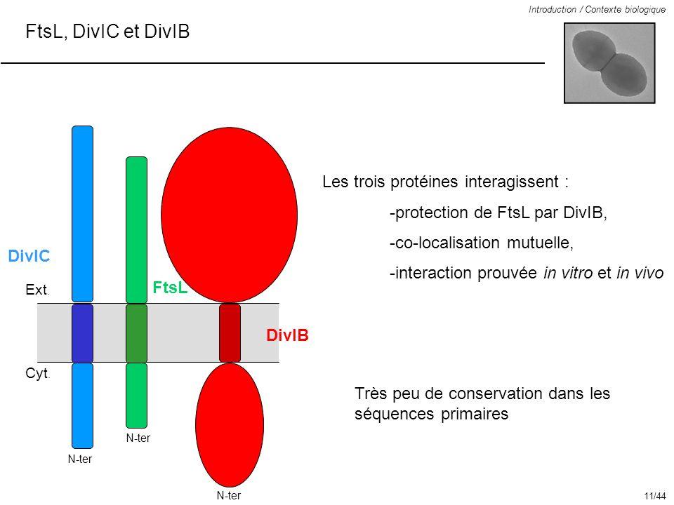 FtsL, DivIC et DivIB Introduction / Contexte biologique Très peu de conservation dans les séquences primaires Les trois protéines interagissent : -pro