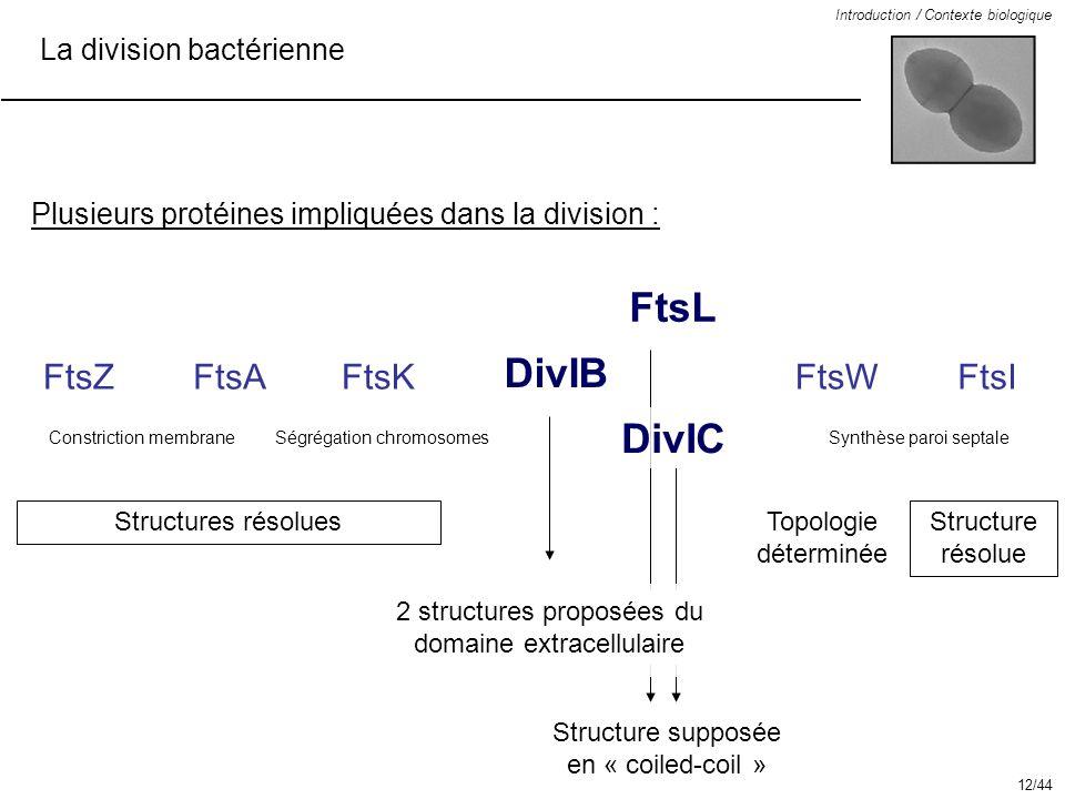 La division bactérienne Introduction / Contexte biologique DivIB DivIC FtsL FtsWFtsI Structure supposée en « coiled-coil » Topologie déterminée Struct