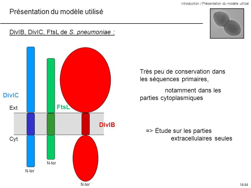 Présentation du modèle utilisé Introduction / Présentation du modèle utilisé DivIB, DivIC, FtsL de S. pneumoniae : Très peu de conservation dans les s