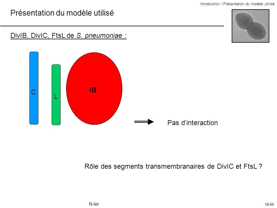 Présentation du modèle utilisé Introduction / Présentation du modèle utilisé DivIB, DivIC, FtsL de S. pneumoniae : IB Pas dinteraction Rôle des segmen