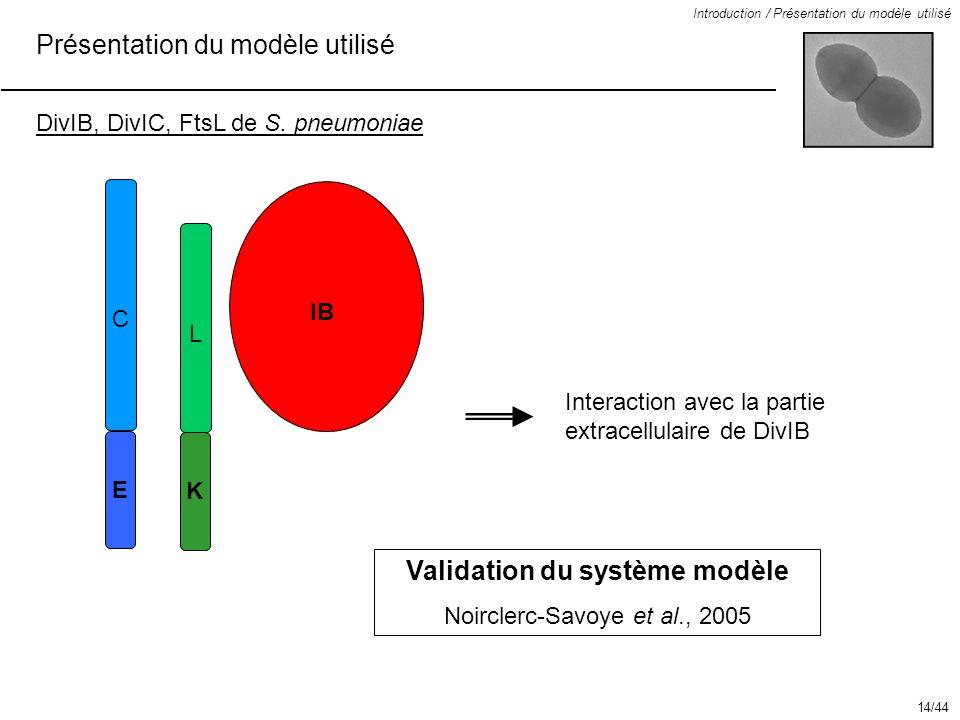 IB Présentation du modèle utilisé Introduction / Présentation du modèle utilisé DivIB, DivIC, FtsL de S. pneumoniae Interaction avec la partie extrace