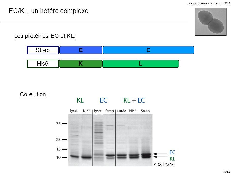 EC/KL, un hétéro complexe I. Le complexe contraint EC/KL EC Strep KL His6 Les protéines EC et KL: Co-élution : SDS-PAGE 16/44