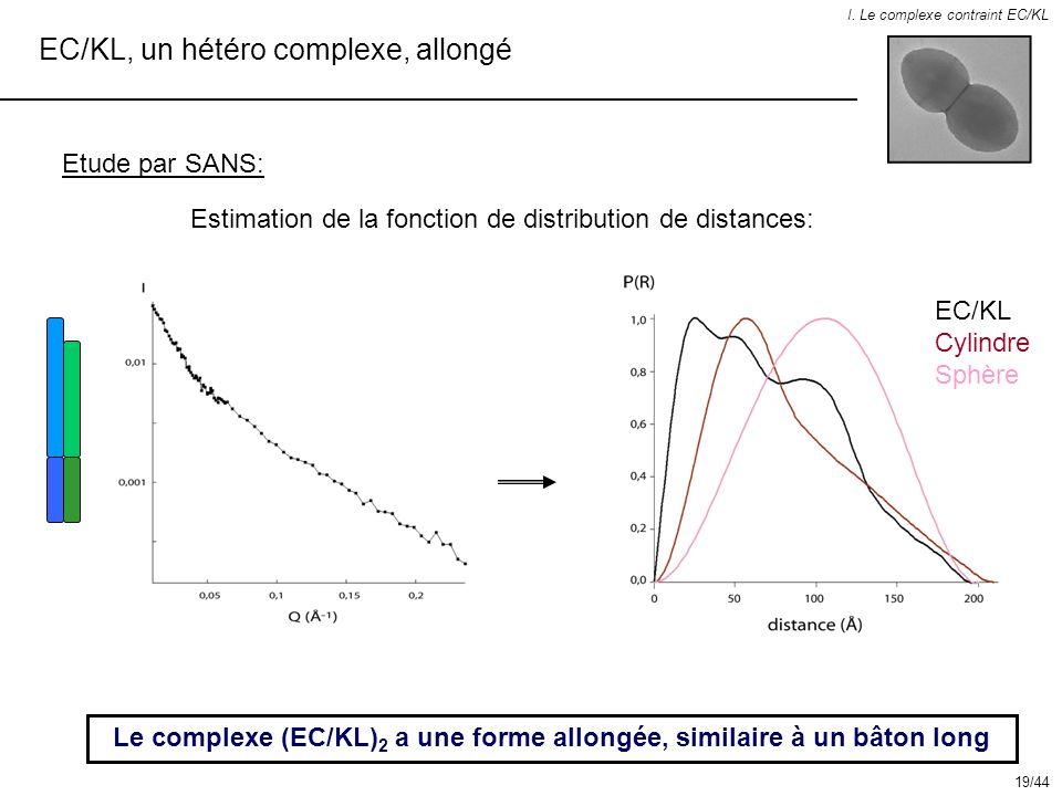 EC/KL, un hétéro complexe, allongé I. Le complexe contraint EC/KL Etude par SANS: Le complexe (EC/KL) 2 a une forme allongée, similaire à un bâton lon