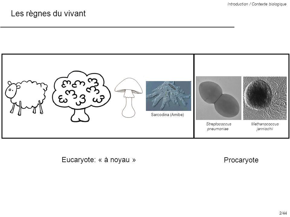 Les règnes du vivant Introduction / Contexte biologique Eucaryote: « à noyau » Procaryote Sarcodina (Amibe) Streptococcus pneumoniae Methanococcus jan
