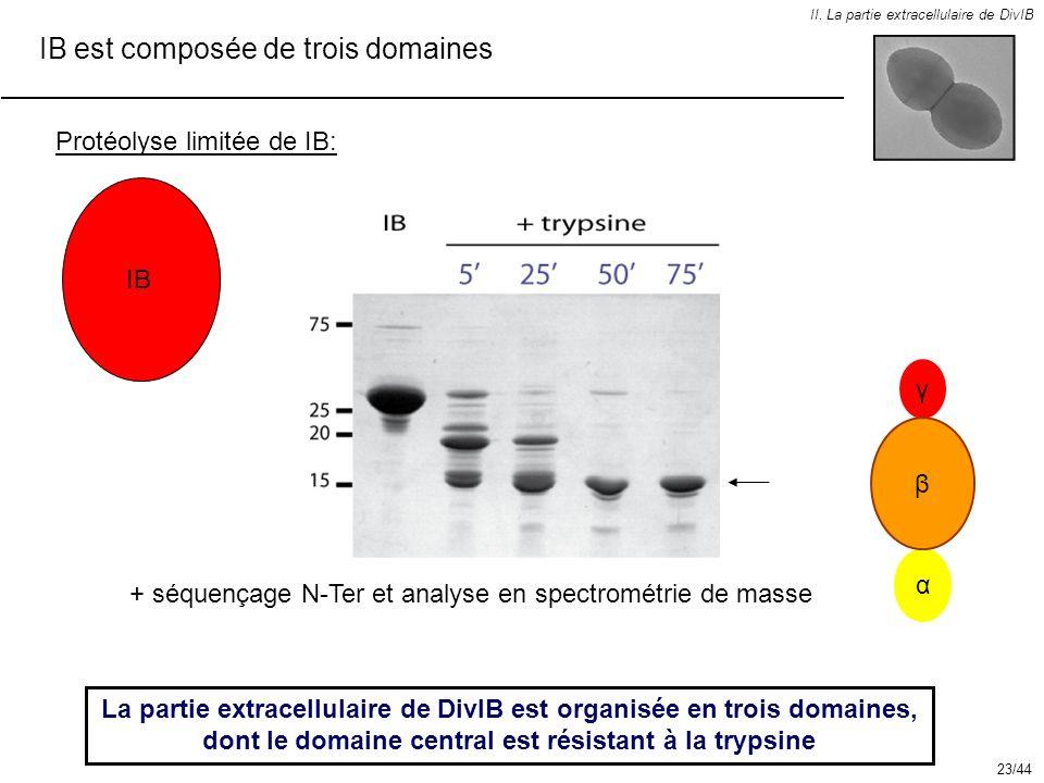 IB est composée de trois domaines II. La partie extracellulaire de DivIB Protéolyse limitée de IB: La partie extracellulaire de DivIB est organisée en