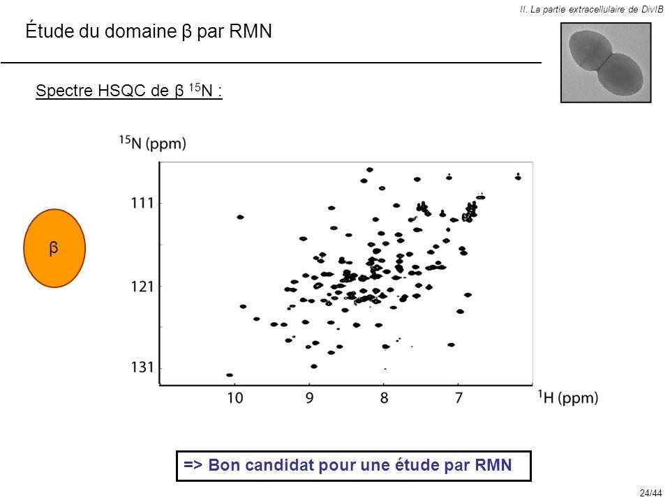 Spectre HSQC de β 15 N : II. La partie extracellulaire de DivIB Étude du domaine β par RMN β => Bon candidat pour une étude par RMN 24/44