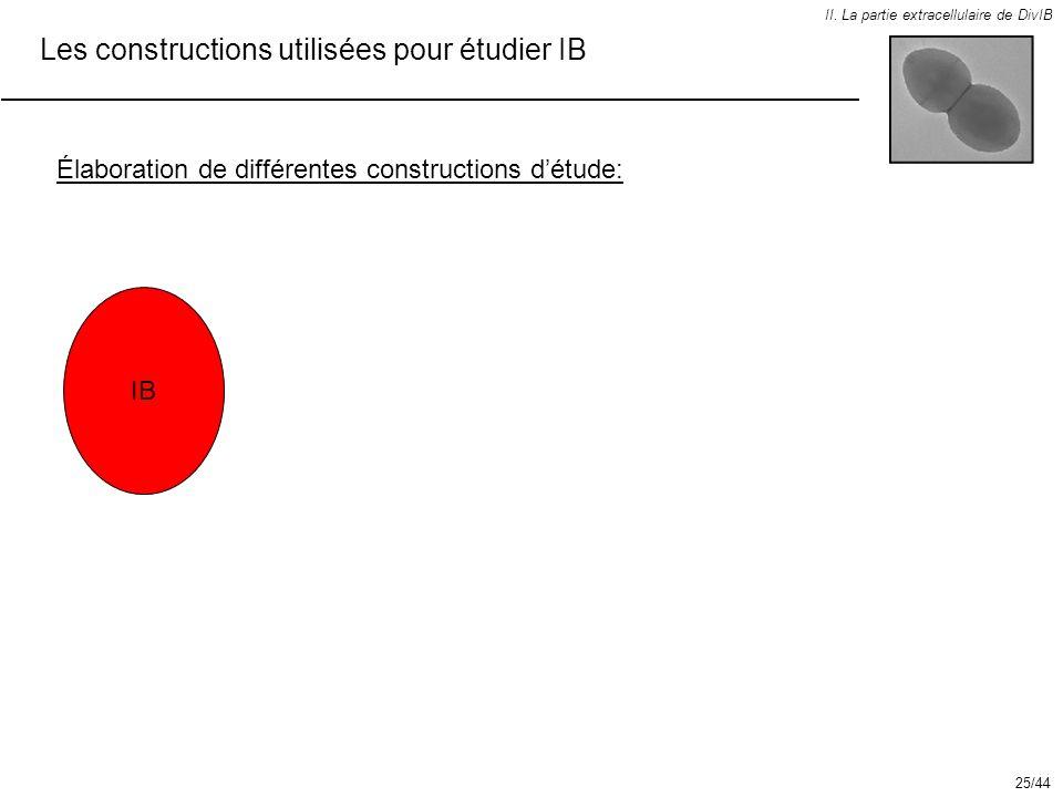 Les constructions utilisées pour étudier IB II. La partie extracellulaire de DivIB Élaboration de différentes constructions détude: IB 25/44