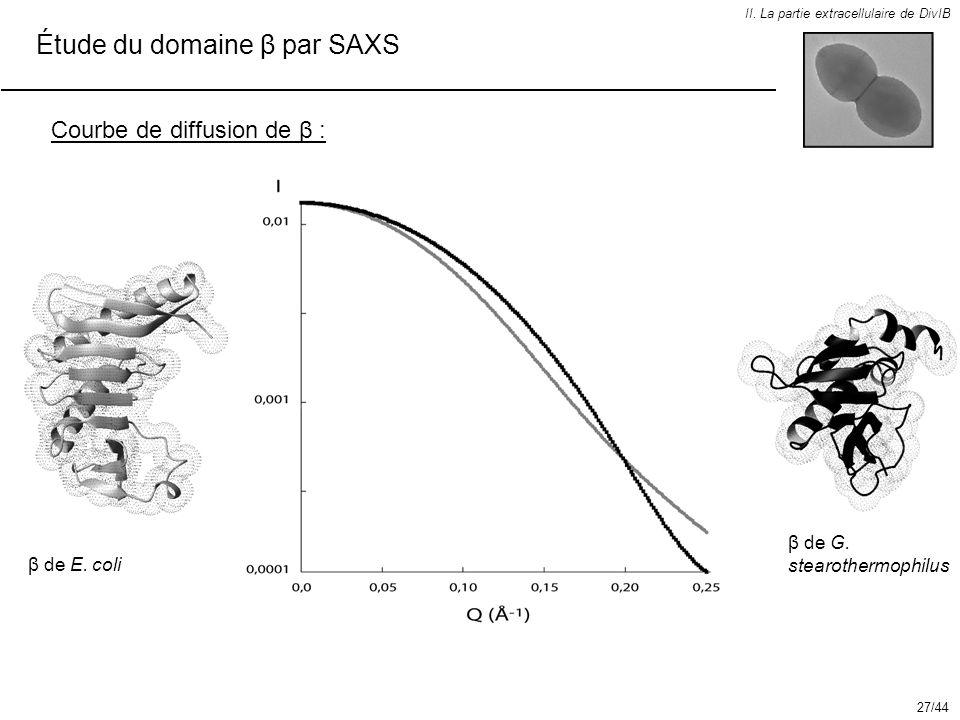 Étude du domaine β par SAXS II. La partie extracellulaire de DivIB Courbe de diffusion de β : β de G. stearothermophilus β de E. coli 27/44