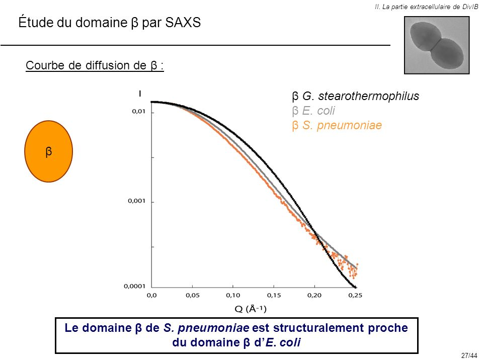 Étude du domaine β par SAXS II. La partie extracellulaire de DivIB Courbe de diffusion de β : Le domaine β de S. pneumoniae est structuralement proche