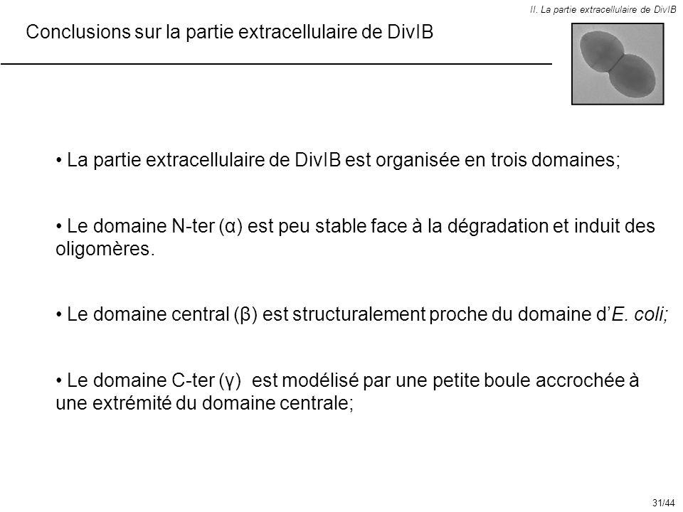 II. La partie extracellulaire de DivIB Conclusions sur la partie extracellulaire de DivIB Le domaine central (β) est structuralement proche du domaine