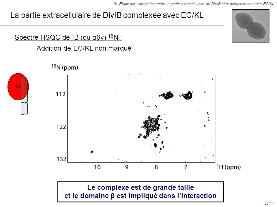 IB III. Étude sur linteraction entre la partie extracellulaire de DIvIB et le complexe contraint EC/KL Le complexe est de grande taille et le domaine