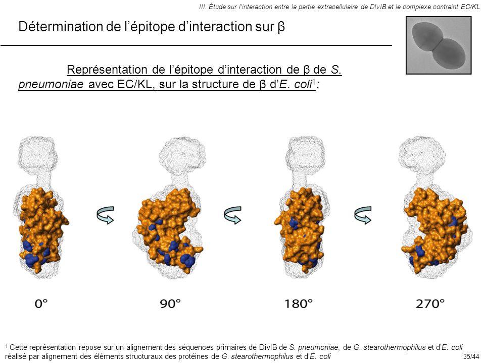 Détermination de lépitope dinteraction sur β III. Étude sur linteraction entre la partie extracellulaire de DIvIB et le complexe contraint EC/KL Repré