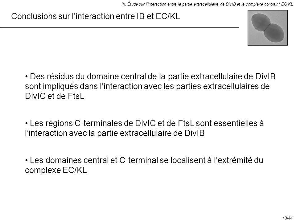 Conclusions sur linteraction entre IB et EC/KL III. Étude sur linteraction entre la partie extracellulaire de DIvIB et le complexe contraint EC/KL Les