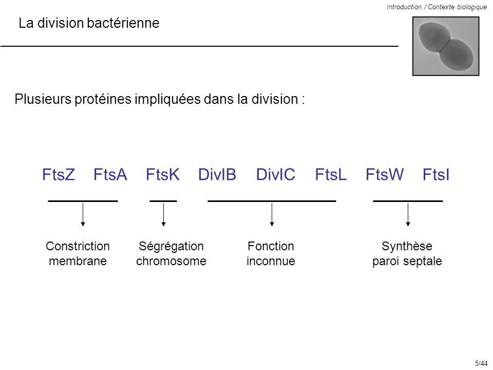 La division bactérienne Introduction / Contexte biologique FtsZFtsAFtsK DivIB DivIC FtsL FtsWFtsI Ordre de recrutement chez E.