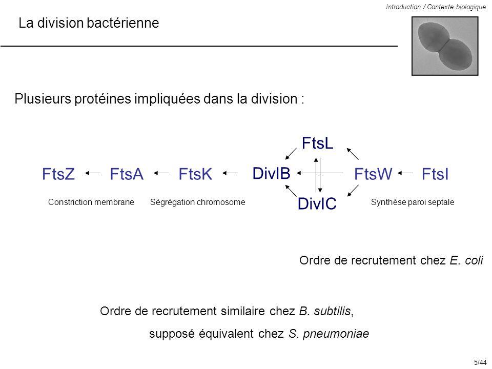 La division bactérienne Introduction / Contexte biologique FtsZFtsAFtsK DivIB DivIC FtsL FtsWFtsI Ordre de recrutement chez E. coli Ordre de recruteme