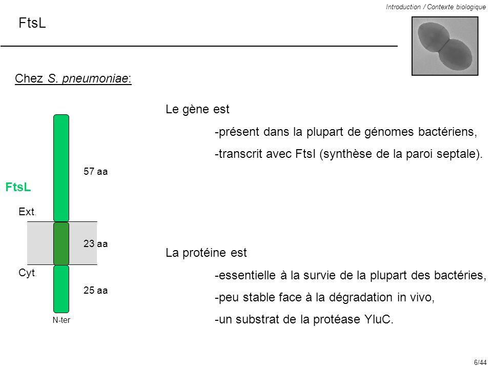 FtsL Introduction / Contexte biologique Chez S. pneumoniae: FtsL 57 aa 23 aa 25 aa Le gène est -présent dans la plupart de génomes bactériens, -transc