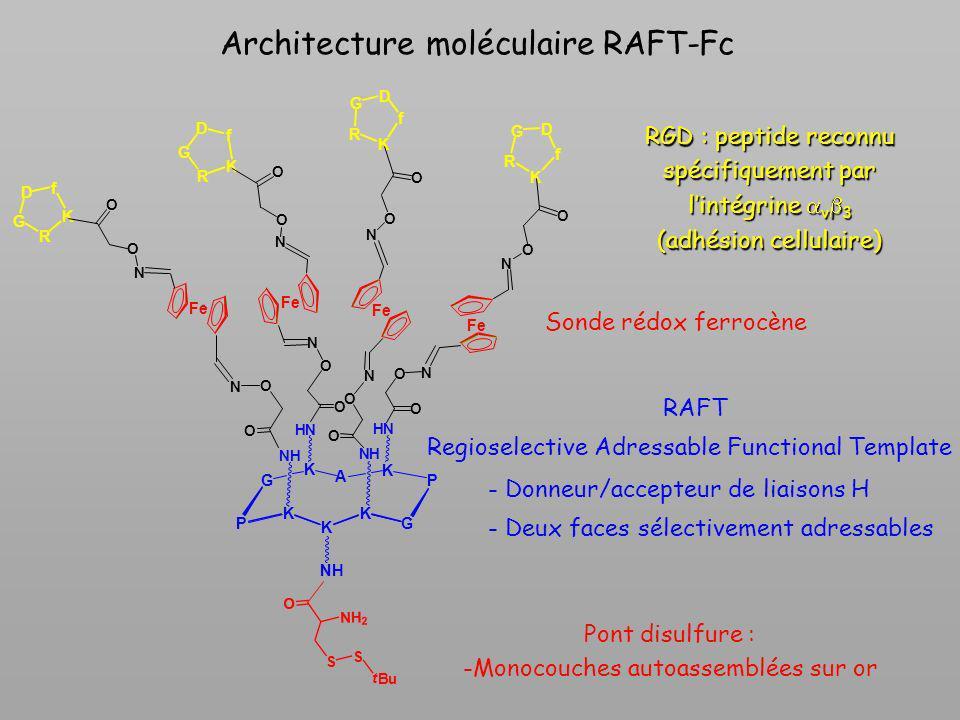 Architecture moléculaire RAFT-Fc Pont disulfure : -Monocouches autoassemblées sur or Sonde rédox ferrocène RGD : peptide reconnu spécifiquement par li