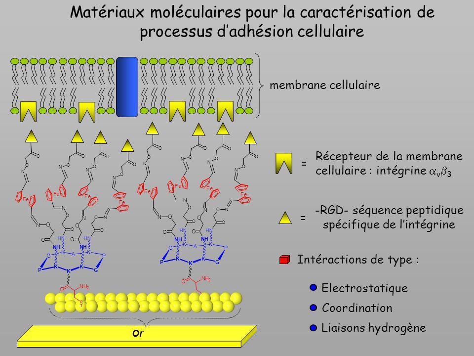 Matériaux moléculaires pour la caractérisation de processus dadhésion cellulaire membrane cellulaire Récepteur de la membrane cellulaire : intégrine v