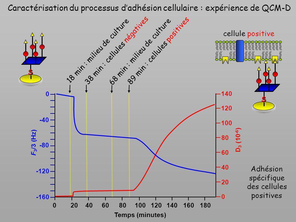 Caractérisation du processus dadhésion cellulaire : expérience de QCM-D 18 min : milieu de culture 38 min : cellules négatives 68 min : milieu de cult