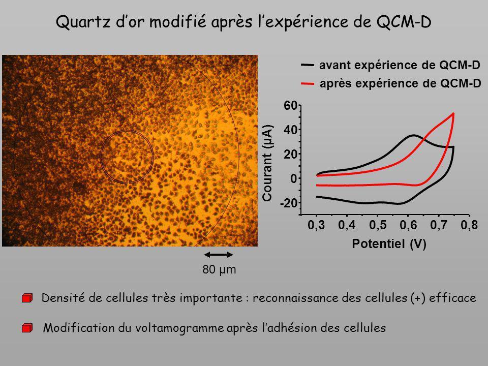 Quartz dor modifié après lexpérience de QCM-D 80 µm 0,30,40,50,60,70,8 -20 0 20 40 60 avant expérience de QCM-D après expérience de QCM-D Courant (µA)