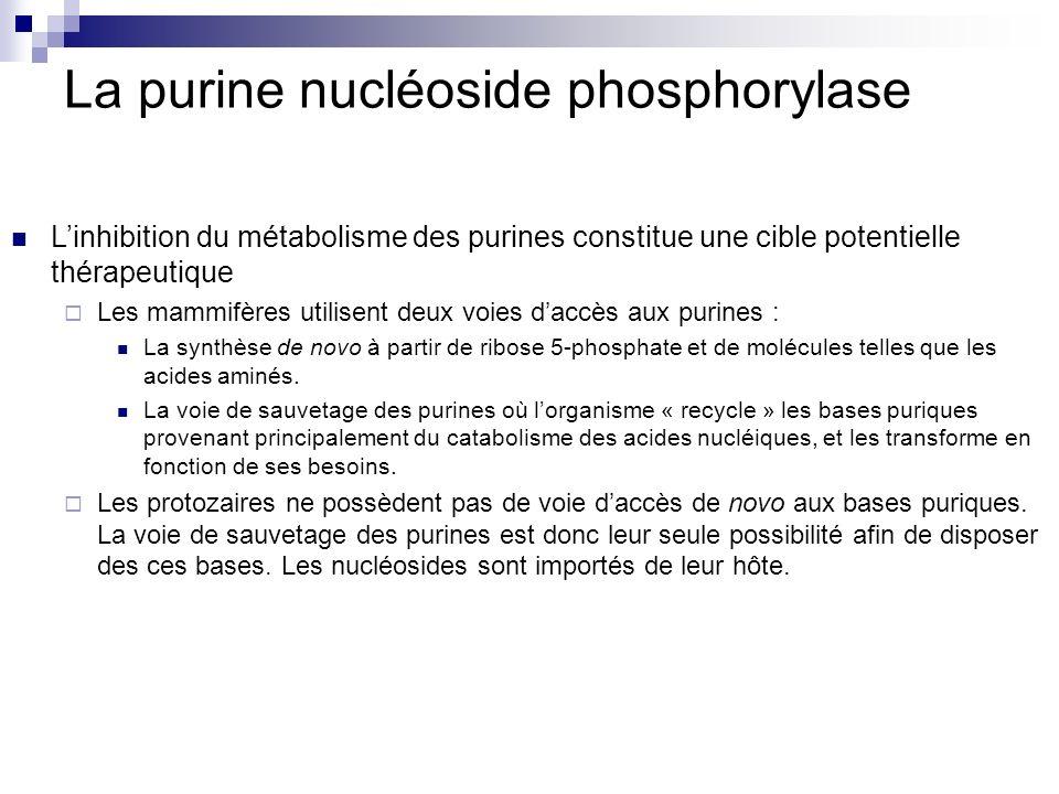 La purine nucléoside phosphorylase Linhibition du métabolisme des purines constitue une cible potentielle thérapeutique Les mammifères utilisent deux
