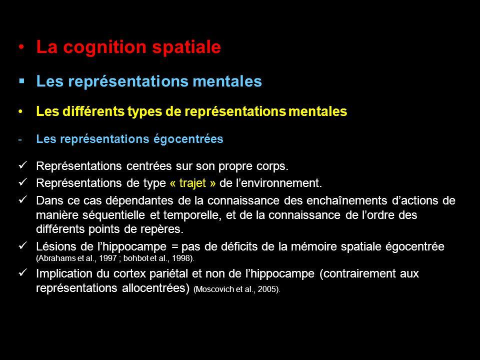La cognition spatiale Les représentations mentales Les différents types de représentations mentales -Les représentations égocentrées Représentations c