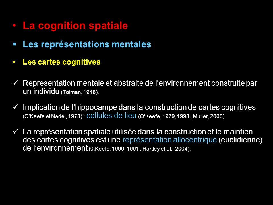 La cognition spatiale Les représentations mentales Les cartes cognitives Représentation mentale et abstraite de lenvironnement construite par un indiv
