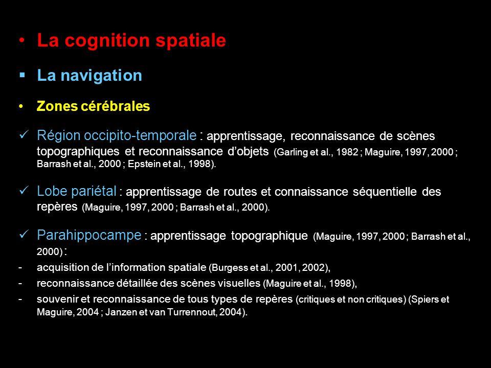 La cognition spatiale La navigation Zones cérébrales Région occipito-temporale : apprentissage, reconnaissance de scènes topographiques et reconnaissa