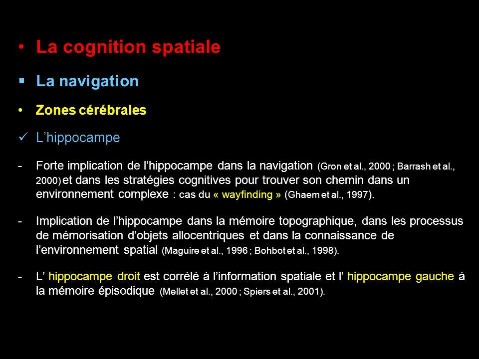 La cognition spatiale La navigation Zones cérébrales Lhippocampe -Forte implication de lhippocampe dans la navigation (Gron et al., 2000 ; Barrash et