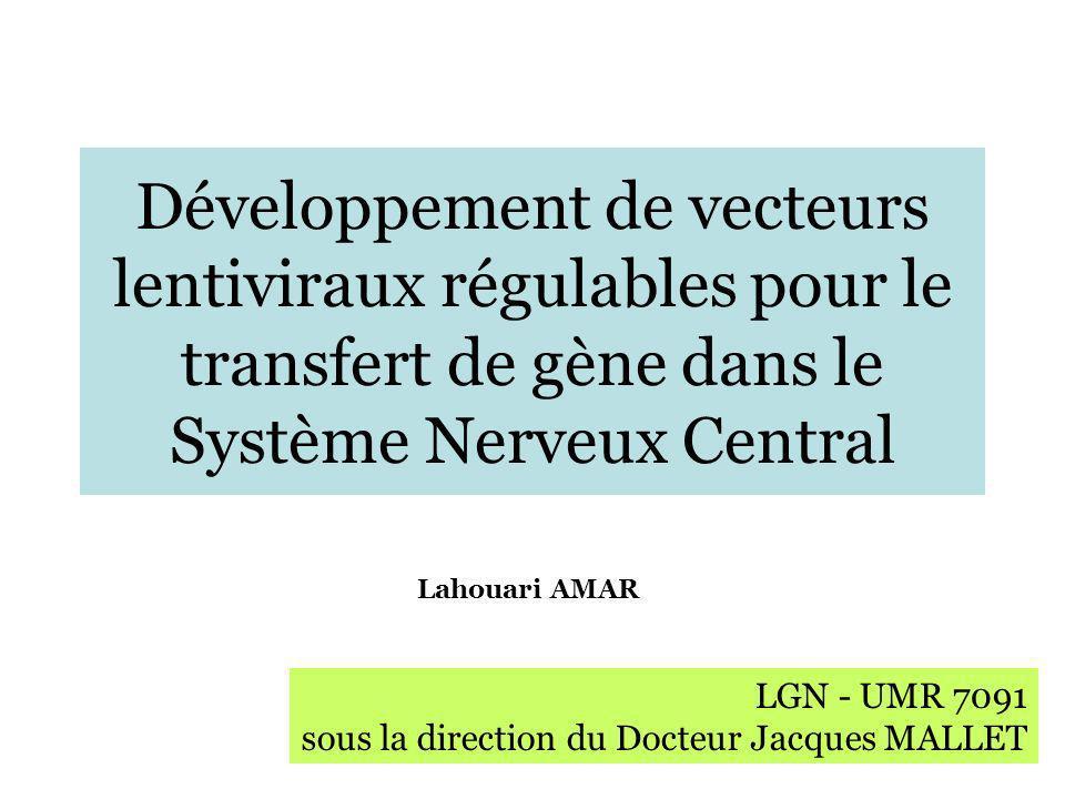 Le transfert de gène dans le SNC Les vecteurs lentiviraux - caractéristiques - avantages et méthode de production - applications Résultats Développement dun seul vecteur lentiviral pour: 1) lexpression régulée dun facteur protéique 2) lexpression régulée de shARN Conclusion générale et perspectives