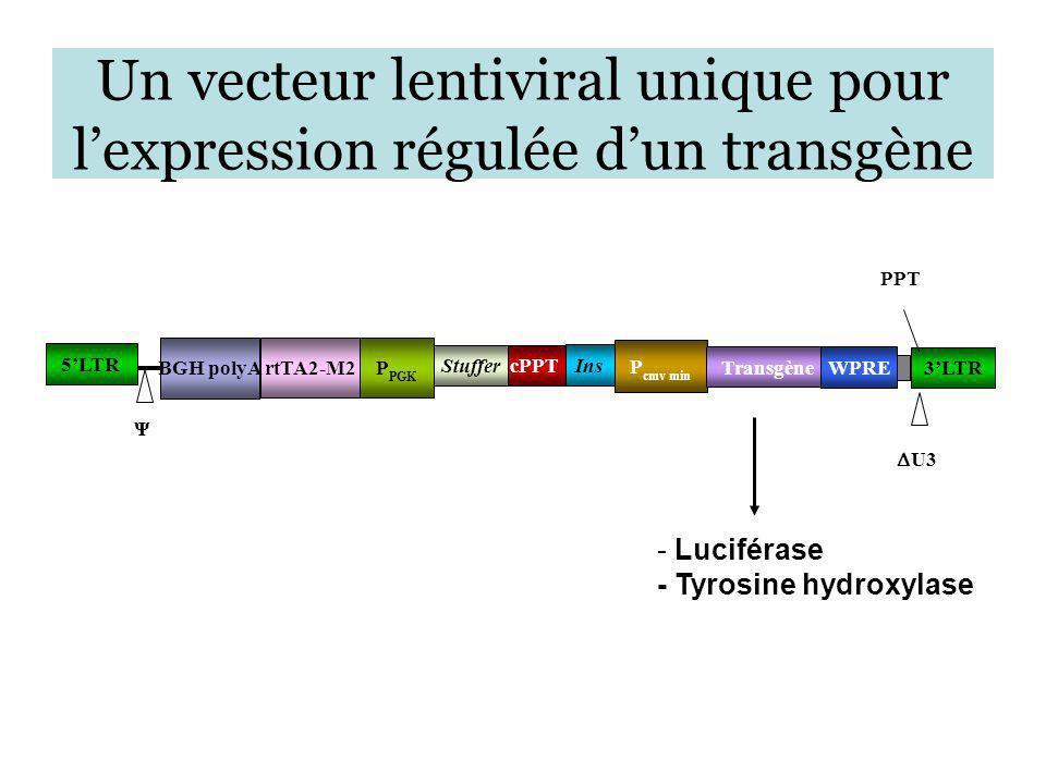 Un vecteur lentiviral unique pour lexpression régulée dun transgène 5LTR 3LTR cPPT P cmv min Transgène U3 PPT Ψ WPRE Ins Stuffer P PGK rtTA2-M2 BGH po