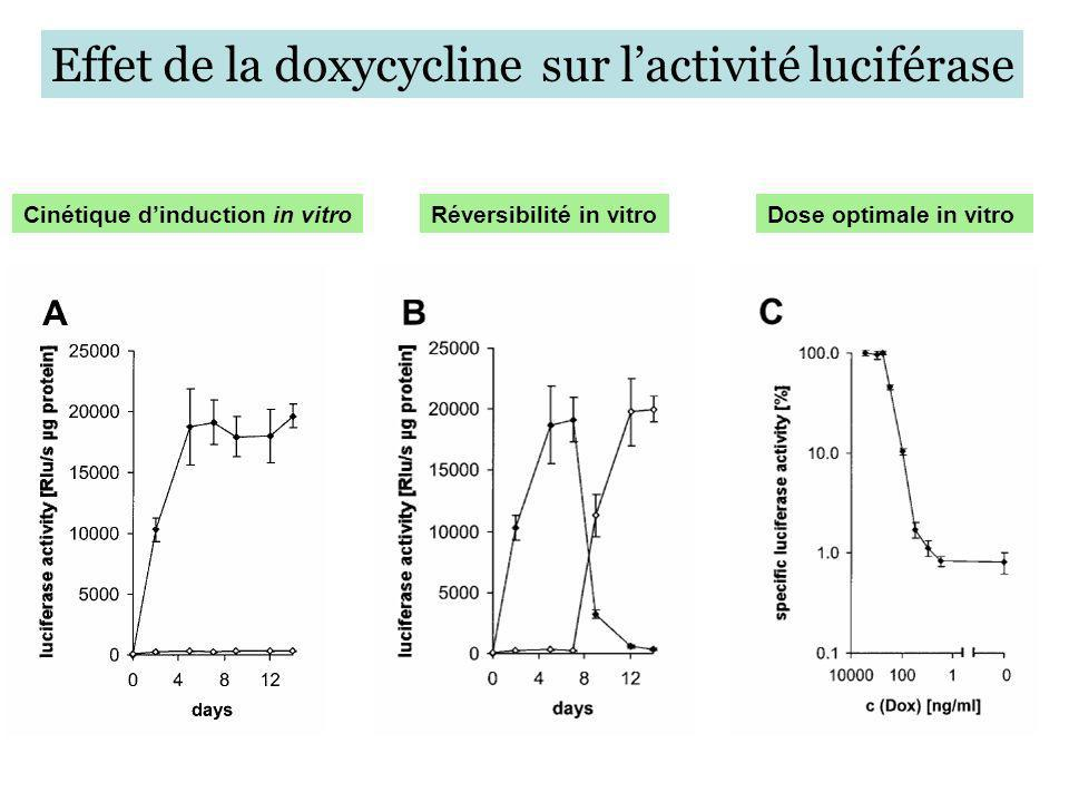 Réversibilité in vitroDose optimale in vitro Effet de la doxycycline sur lactivité luciférase Cinétique dinduction in vitro