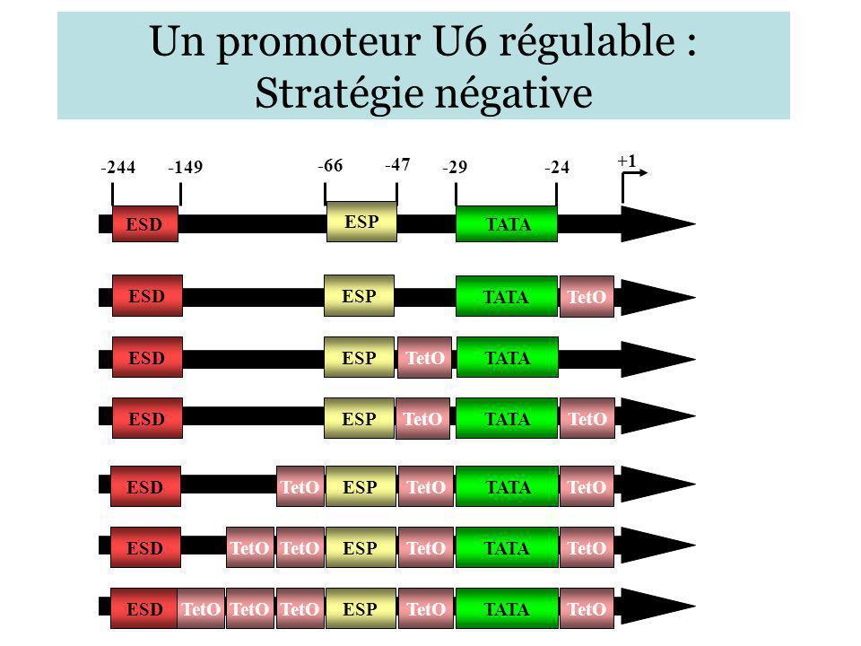 Un promoteur U6 régulable : Stratégie négative ESDESP TetO TATATetOESDESP TetO TATA ESDESP TetO TATAESDESP TetO TATATetO ESD TATA +1 -24 -29 -47 -66 -