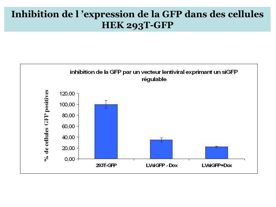 Inhibition de l expression de la GFP dans des cellules HEK 293T-GFP % de cellules GFP positives