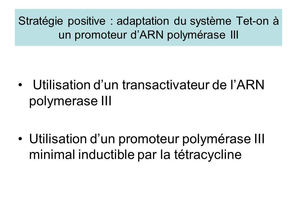 Stratégie positive : adaptation du système Tet-on à un promoteur dARN polymérase III Utilisation dun transactivateur de lARN polymerase III Utilisatio