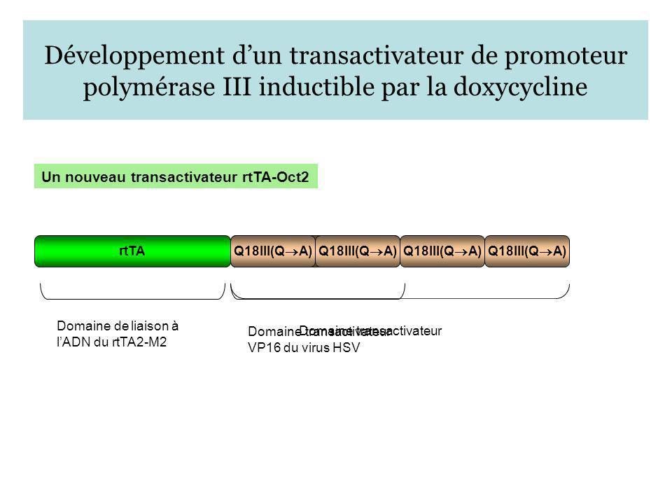 Développement dun transactivateur de promoteur polymérase III inductible par la doxycycline Un nouveau transactivateur rtTA-Oct2 rtTA Domaine de liais