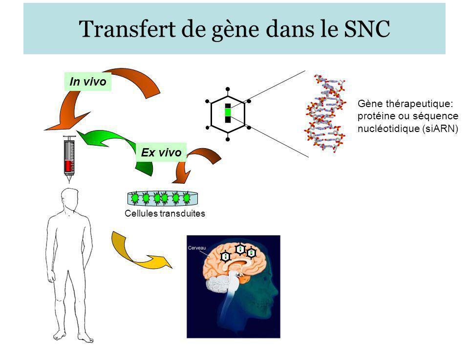 Spécificités du système nerveux central relatives au transfert de gène Présence de la barrière hématoencéphalique –Limite le passage de molécules thérapeutiques »Nécessité du transfert de gène… La majorité des cellules du SN sont quiescentes –Possibilité dutilisation de vecteurs intégratifs ou épisomaux –Vecteurs non viraux peu efficaces à long terme »préférentiellement viral… Diversité cellulaire –Nécessité dexpression restreinte ou élargie du facteur thérapeutique –Possibilité de ciblage dune structure ou noyau particulier dans le SN –Transport rétrograde ou antérograde dans les neurones » avec un vecteur dont le tropisme est modulable.