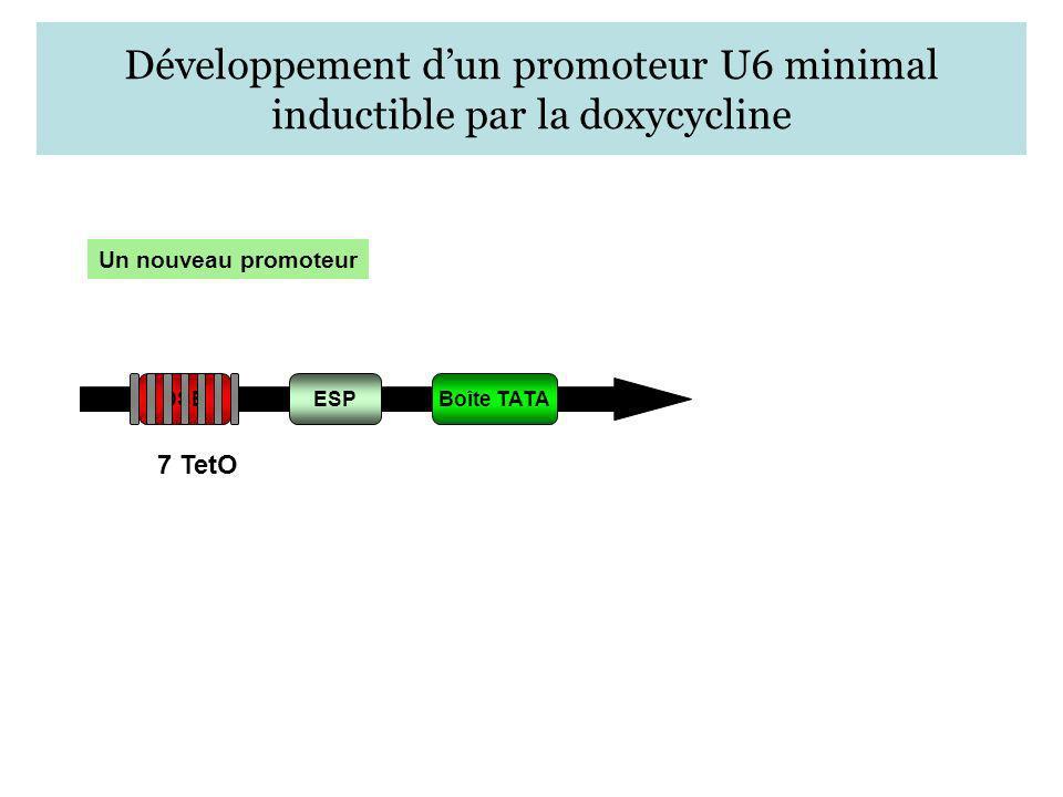Un nouveau promoteur ESPBoîte TATA Développement dun promoteur U6 minimal inductible par la doxycycline DSE 7 TetO