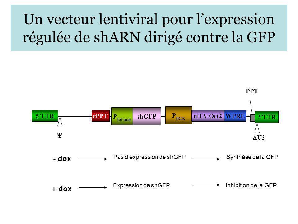 Un vecteur lentiviral pour lexpression régulée de shARN dirigé contre la GFP 5LTR 3LTR cPPT U3 PPT Ψ P PGK rtTA-Oct2WPRE P U6 min shGFP - dox + dox Pa