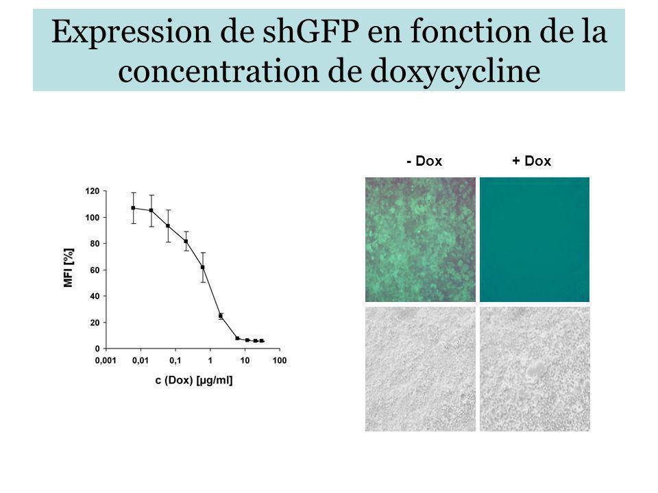 Expression de shGFP en fonction de la concentration de doxycycline - Dox+ Dox