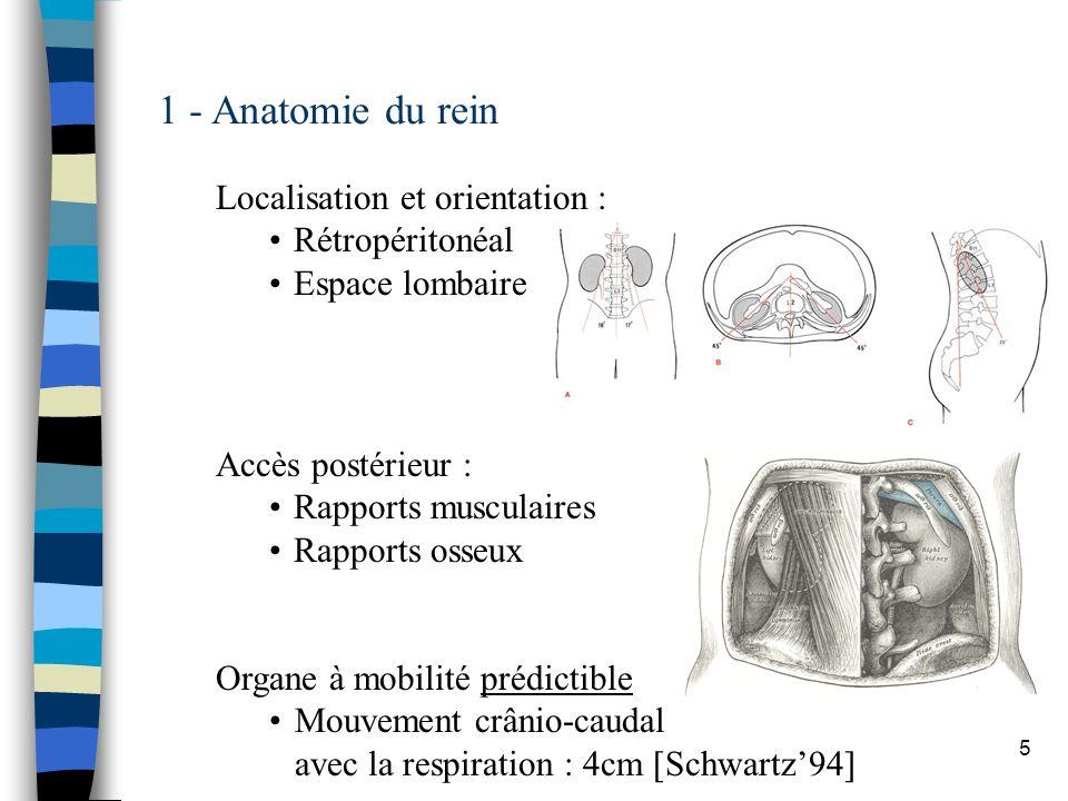5 1 - Anatomie du rein Localisation et orientation : Rétropéritonéal Espace lombaire Accès postérieur : Rapports musculaires Rapports osseux Organe à