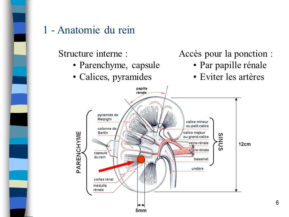 6 1 - Anatomie du rein Structure interne : Parenchyme, capsule Calices, pyramides 12cm 5mm Accès pour la ponction : Par papille rénale Eviter les artè
