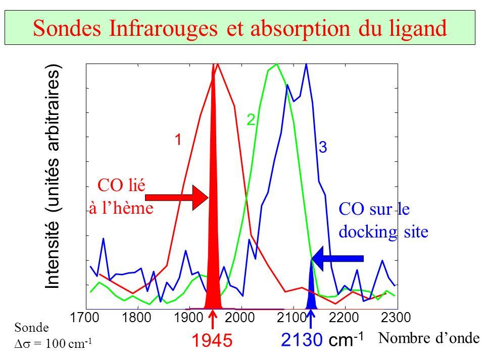 nombre donde ( cm -1 ) 1700180019002000210022002300 CO sur le docking site CO lié à lhème 1 2 3 1945 2130 cm -1 Nombre donde Intensité (unités arbitra