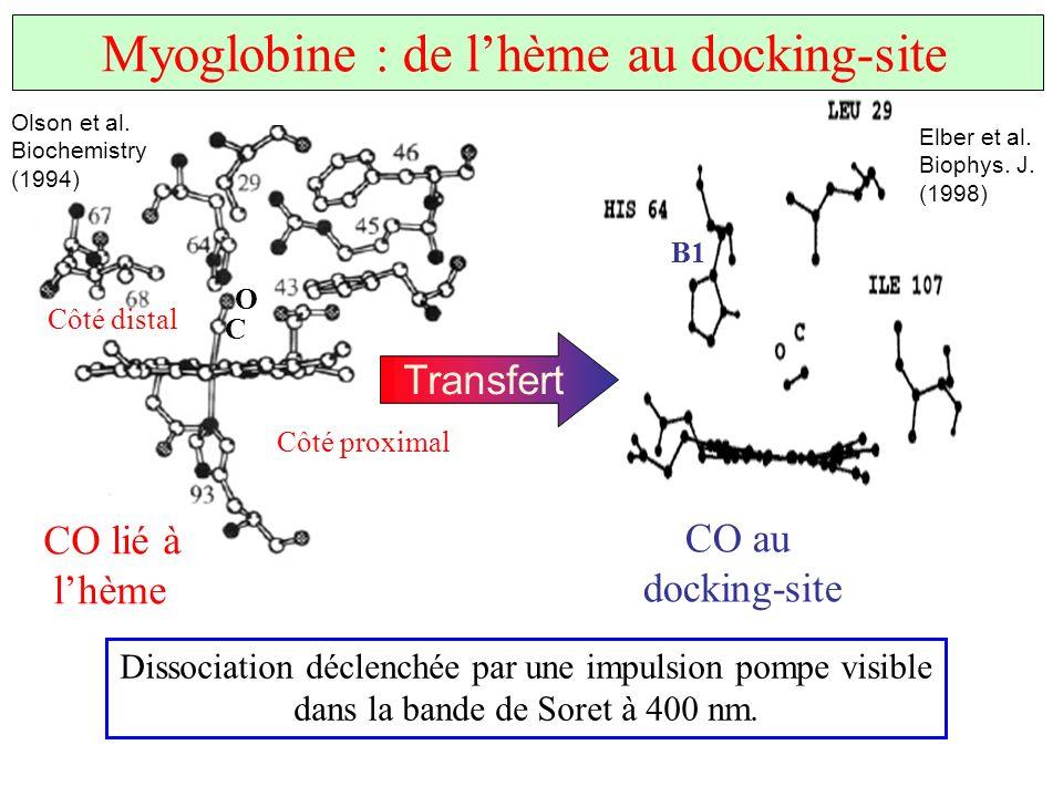Olson et al. Biochemistry (1994) Elber et al. Biophys. J. (1998) CO lié à lhème CO au docking-site Transfert C O Côté proximal Côté distal B1 Myoglobi