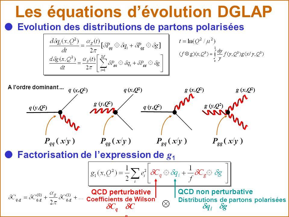 Les équations dévolution DGLAP g ( y, Q 2 ) q ( y, Q 2 ) g ( y, Q 2 ) q ( y, Q 2 ) q ( x, Q 2 ) q ( x, Q 2 ) g ( x, Q 2 ) g ( x, Q 2 ) P qq ( x / y )