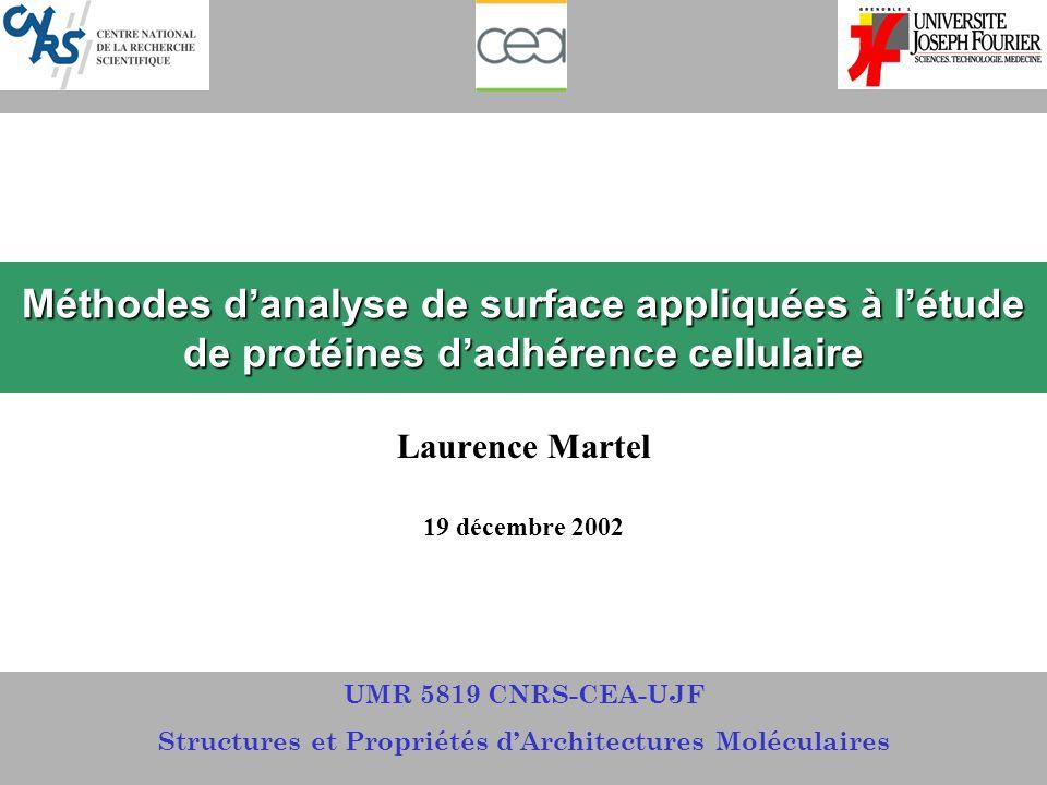 Méthodes danalyse de surface appliquées à létude de protéines dadhérence cellulaire Laurence Martel 19 décembre 2002 UMR 5819 CNRS-CEA-UJF Structures