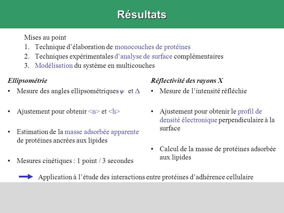 Résultats Mises au point 1.Technique délaboration de monocouches de protéines 2.Techniques expérimentales danalyse de surface complémentaires 3.Modéli