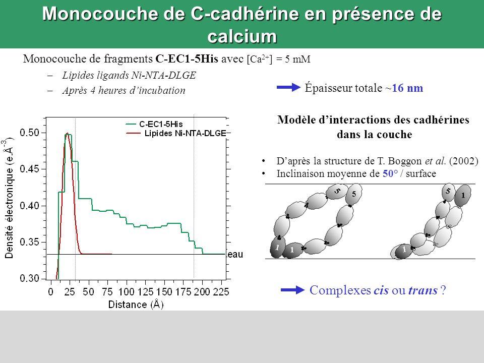 Monocouche de C-cadhérine en présence de calcium Monocouche de fragments C-EC1-5His avec [Ca 2+ ] = 5 mM –Lipides ligands Ni-NTA-DLGE –Après 4 heures