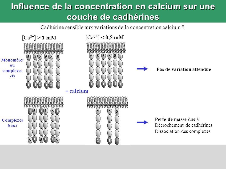 Influence de la concentration en calcium sur une couche de cadhérines Cadhérine sensible aux variations de la concentration calcium ? Monomères ou com